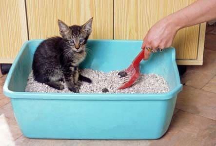 bandeja para gato abierta