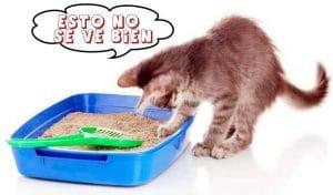 elegir arenero para gatos en peru