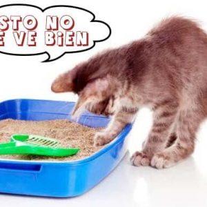 Areneros y Arena para gatos: cómo elegir lo mejor de Perú y no perjudicar a tu mascota