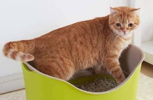 un gato por sanitario