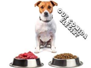 Alimento Para Perros. QuE Comida Elegir