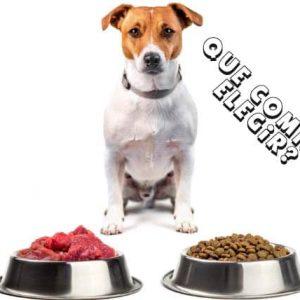 Alimento Para Perros: ¿Qué Comida Elegir? Consejos para una alimentación sana.